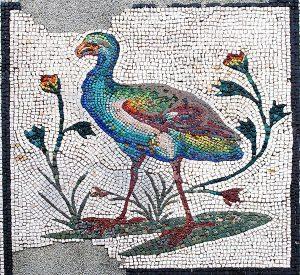 Mosaique aux Xenia-Poule sultane